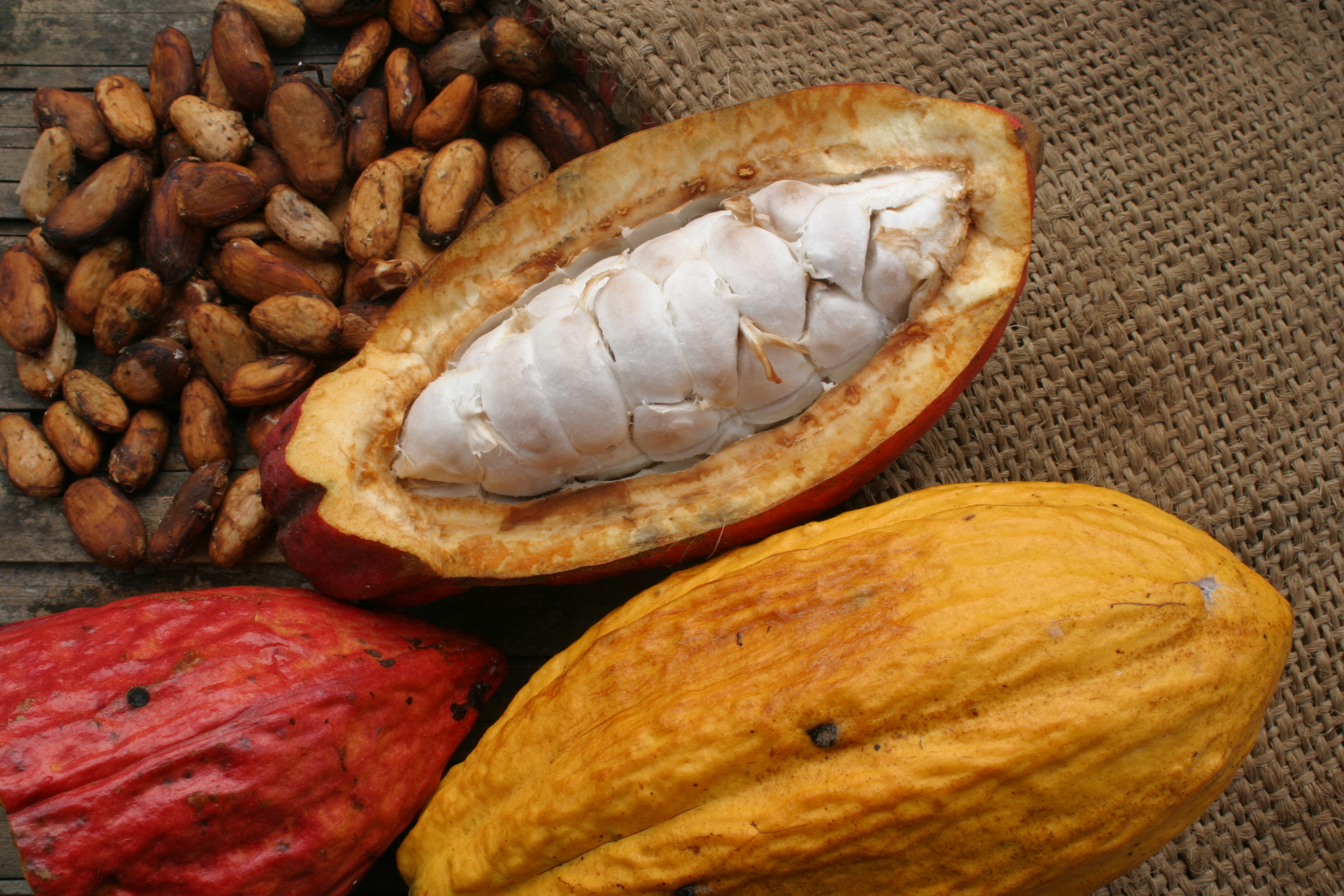 Cacao ancient mayan superfood for men belizean gold for Ancient mayan cuisine
